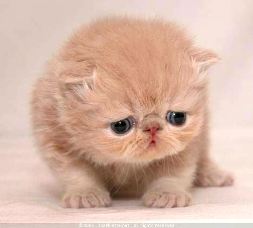 Sad_kitty